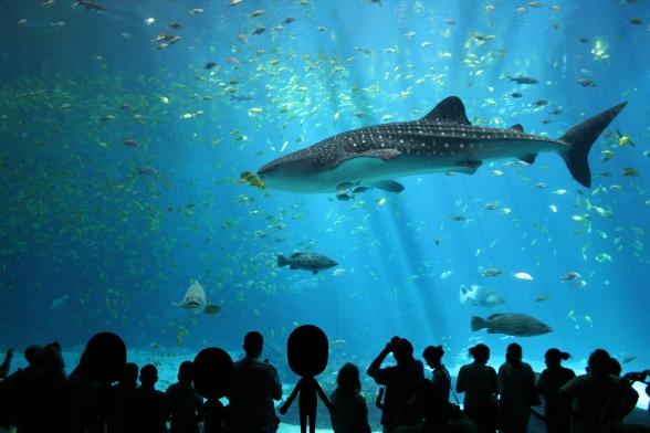 Mii aquarium
